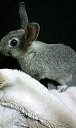 ただ純粋にウサギ好き