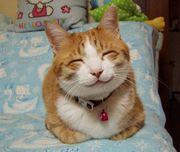 ☆猫目で猫背で猫舌なアナタ☆