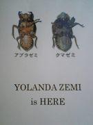 Yolanda Zemi ☆ ヨランダゼミ