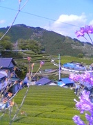 静岡弁研究会