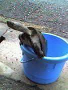 うちの亀はバカ。