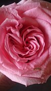 薔薇大好き♪!