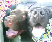 DOG♥LOVE