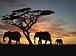 アフリカ一人旅