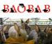 ウサギ専門店 バオバブ