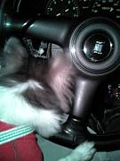 愛犬とスポーツカーでドライブ