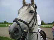 外国(特にポーランド)and馬