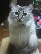 猫の姫ちゃん≡^・ω・^≡