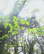 森林活動ガイド