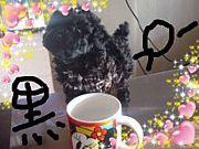 プードルは黒でU・ω・)♡