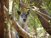 帝京科学大学 自然と野生生物