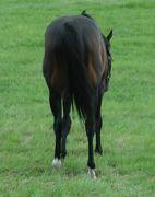馬のうしろ姿が好き