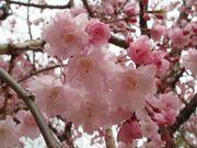 ★美しい日本を語り合いたい♪★