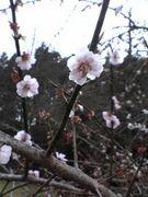 京都花園高校バドミントン同好会