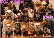 DOG☆大好き∪・ω・∪ 静岡