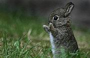 全日本ウサギに声をかける会