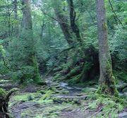 九州の森林の会