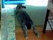 うさぎのグリグリとアタシの会話