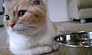猫カフェ☆キャットストリート☆