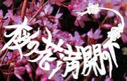 桜の花、満開の下