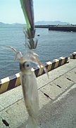 広島の釣り好き集まれ!!