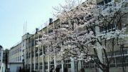 比叡山高校 吹奏楽委員会