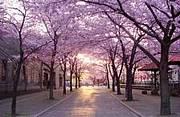 ネオロマ大好きさin北海道