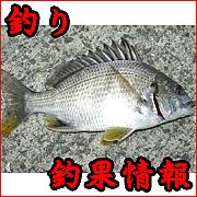 【釣り】今日の釣果情報