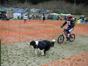 人と犬との運動会『ギグレース』