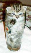 猫好き会 in 広島
