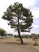 澄川南小学校