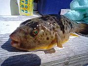 KAIちゃん漁業組合