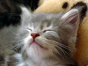 睡眠の実験