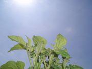 食と農を考える北海道若手の会