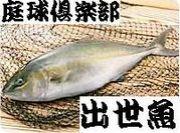 庭球倶楽部「出世魚」