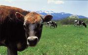 似業種フォーラム-柵のない牧場