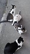 石川県で猫の飼い主を探そう