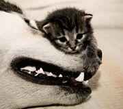 猫好きさんへ