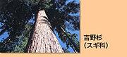 吉野杉〜林業の未来〜