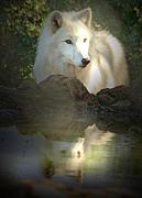 白狼 〜White Wolf〜