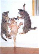 猫舌 + めんどくさい