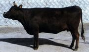 牛タンシチュー