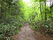 林道へ行こう 広島