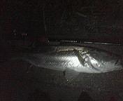 LURE FISHING TEAM 高橋組