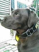 大型犬 大好き♪♪in 奈良県