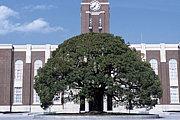 京都大学青い鳥