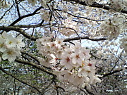 お花見2008