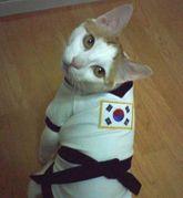 在韓日本人猫友の会