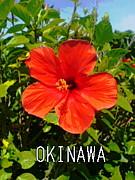 OKINAWAN'ARTIST