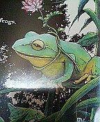 雪蛙 ‐snow frog‐